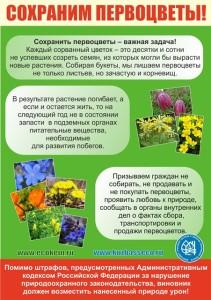 Сохраним первоцветы